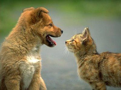 dog cat talking